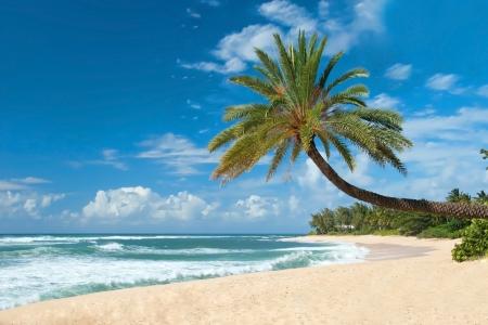 Ongerept zandstrand met palmbomen en azuurblauwe oceaan op achtergrond