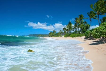 Ongerepte zandstrand met palmbomen en de azuurblauwe oceaan op achtergrond
