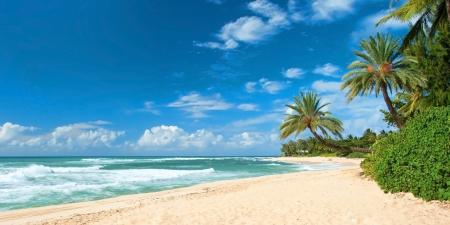 ヤシの木と紺碧の海と手つかずの砂浜のビーチ