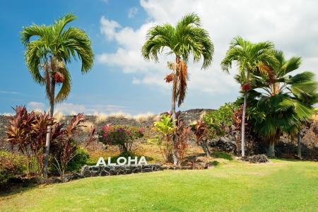 アロハ ハワイ島ハワイでヤシの木と署名します。 写真素材