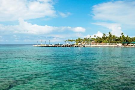 ハワイの紺碧の海とヤシの木