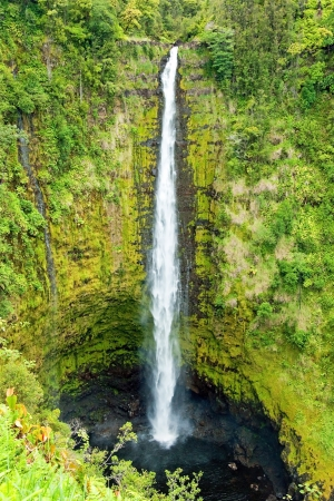 Akaka Falls on the Big Island of Hawaii in a tropical rain forest photo