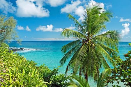 マウイ島ハワイ パラダイス