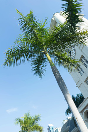 palm or coconut tree and public building on background blue sky sunlight