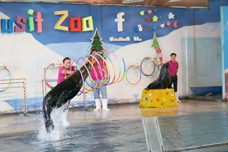 Bangkok,Thailand,Feb 13 ,2018 ,Sea lion show jump up from water in to loops or hula hoops line with animal traners on stage of Dusit Zoo show,moving blur