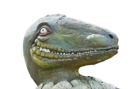head of raptor dinosaur look by one eye a bit smile while it hatch from egg on isolated white background