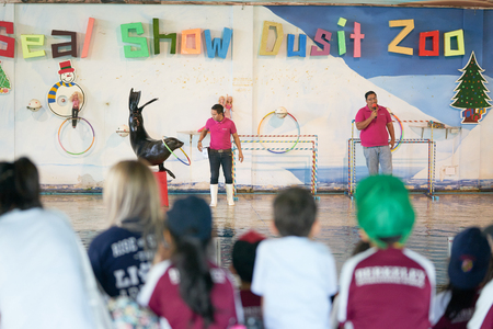 Bangkok,Thailand,Feb 13 ,2018 ,Sea lion show play ball with basket with animal trainers on stage of Dusit Zoo show loops or hula hoops line with animal trainers on stage of Dusit Zoo show,moving blur