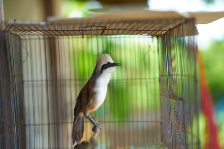 woodpecker or bird in cage