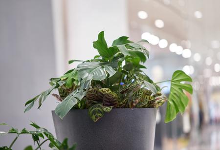 Tree pot in indoors light