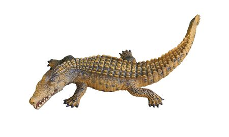 Alligator or crocodile on isolated white background 写真素材 - 128947109