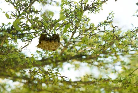 old Bee honeycomb on branches tree background