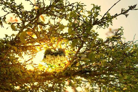 old Bee honeycomb on sun light background