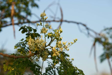 flowers petal tree branch of weid leaves in forest on sky background in natural view Stock fotó