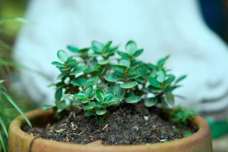 small plant in soil pot like bon sai concept Stock fotó