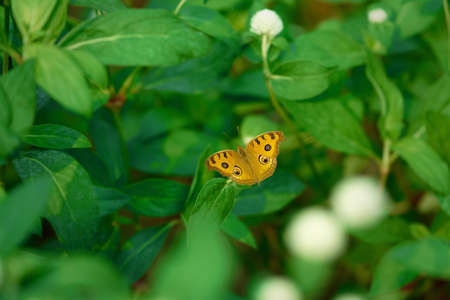 Beautiful yellow open wing butterfly on green leaves background