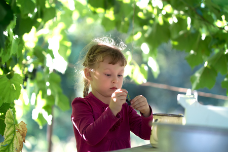 bacca: little girl in purple dress eating grapes Stock Photo