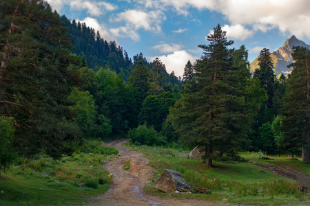 rocky road through the forest leading to the peaks