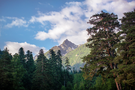 mountain peak covered with forest against blue sky Stock Photo