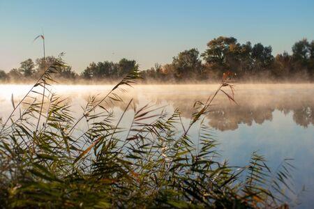 fog on the river at sunrise through reeds Фото со стока