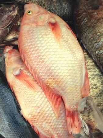nile tilapia: Nile tilapia fish