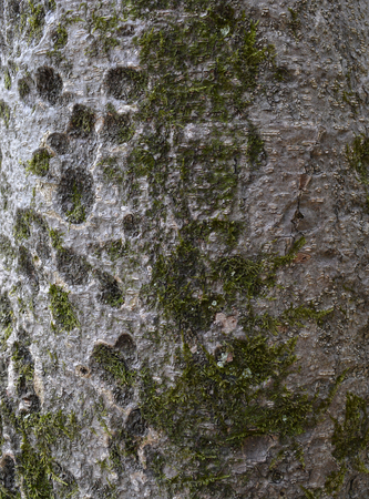 Tree bark mold