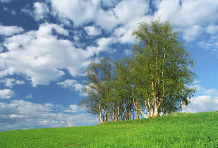 Nice clumb of green trees, fresh grass and blue sky photo