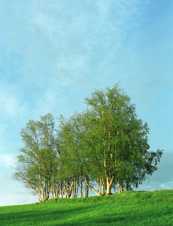 Nice clumb of green trees, fresh grass and blue cloudy sky photo