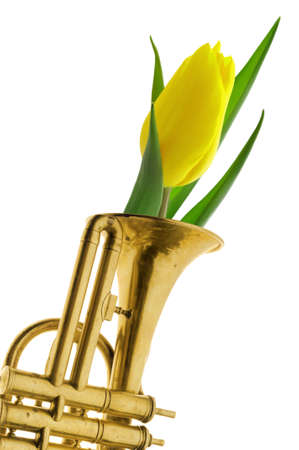 Yellow tulip in gold trumpet vintage isolated with path white background photo