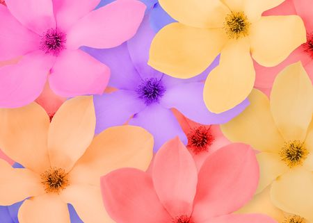close-up frame of a beautiful flowers Stock Photo - 3390963