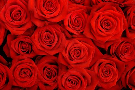 big bunch of red roses photo