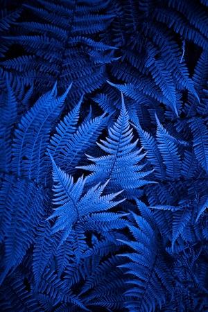 close up photogtaphy of night fern