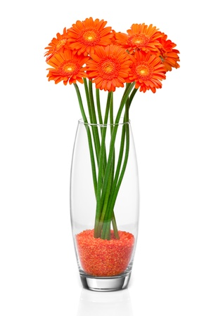Orange gerbera flower in vase. Over white background. photo