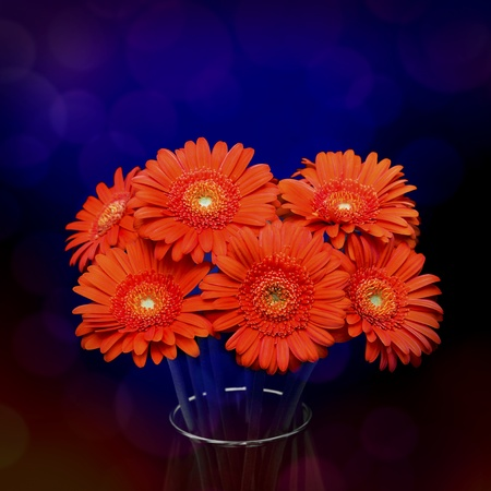 Orange gerbera flower in vase photo