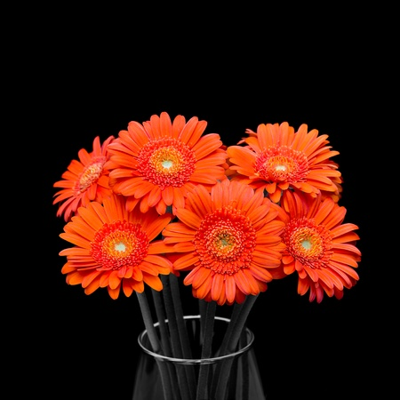 Orange gerbera flower in vase. Over blac background. Stock Photo - 12505988
