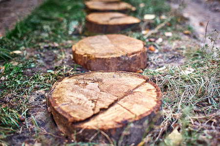 Path of stumps. Garden path way from cut stumps, walkway of cross section of tree trunks.