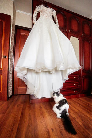 the cat sits next to the brides dress