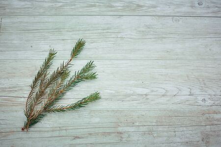 branch Christmas tree on a colored background, a place for text