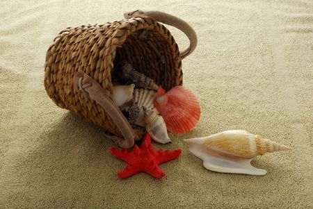 Shells spilled from interwoven basket onto sand colored towel
