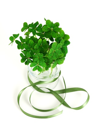 bouquet of false shamrock (oxalis) with green ribbon in glass on white background