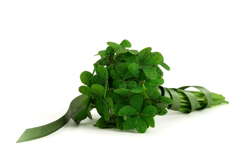 Bouquet of false shamrock with green ribbon lying on white background Stock Photo - 8797811