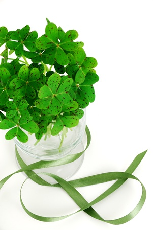 Closeup of bouquet of false shamrock (oxalis) with green ribbon photo