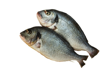 Two raw denis( sea bream) fishes  isolated on white  background Stock Photo