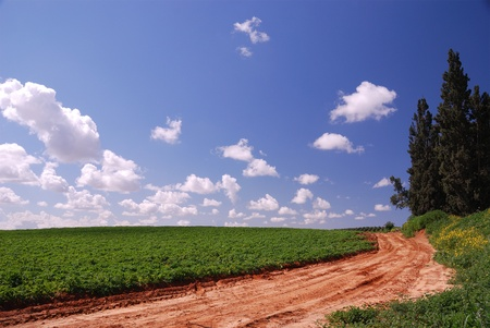 Dirt road in green fields under blue sky on bright spring day photo