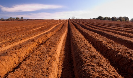 Fresh tilth - arable land with furrows going to horizon under blue sky Stock Photo - 9272600