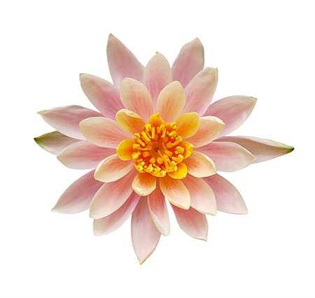 Top view of beautiful pink water lily flower isolated on white background photo