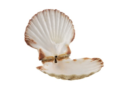 Opened empty scallop shell isolated on white background photo