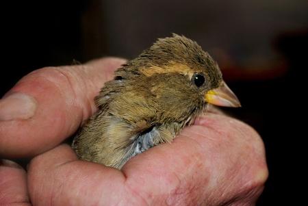 bird in hand photo