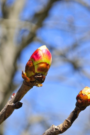 births: branch with bud