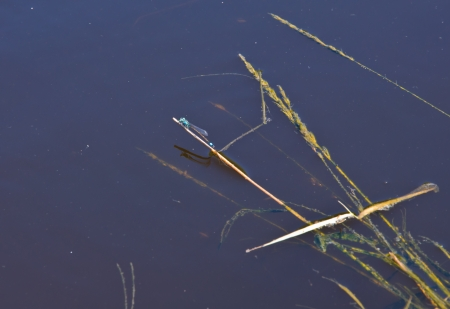 sailling: dragonfly