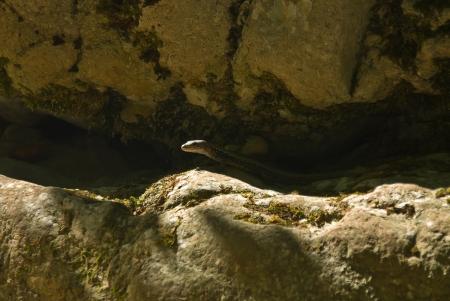 lizard Фото со стока